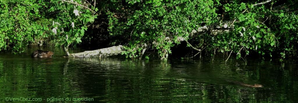 castors-orage-haiku©VersChez.com
