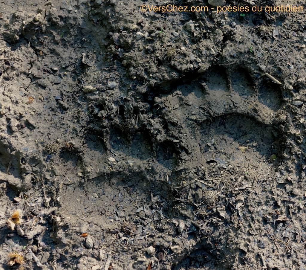 trace_ours_slovenie_VersChez.com
