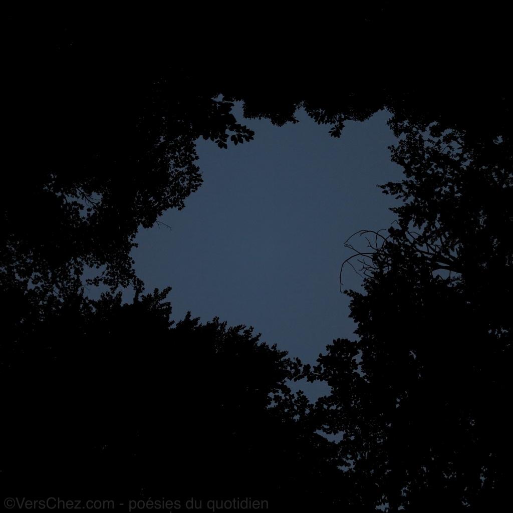 nuit-foret-silence-haiku