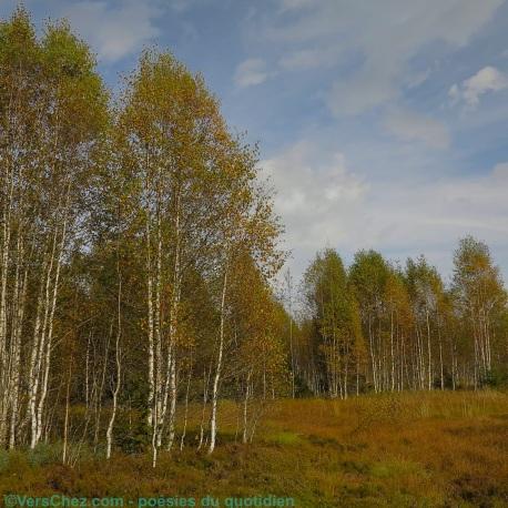 automne-haiku-poeme-couleurs