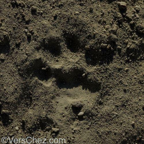 snow-leopard-footprint