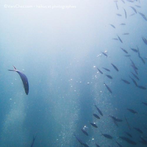 plongee poissons haiku poesie