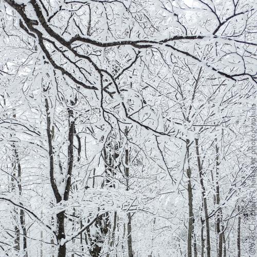 haiku-neige-poesie-givre©verschez