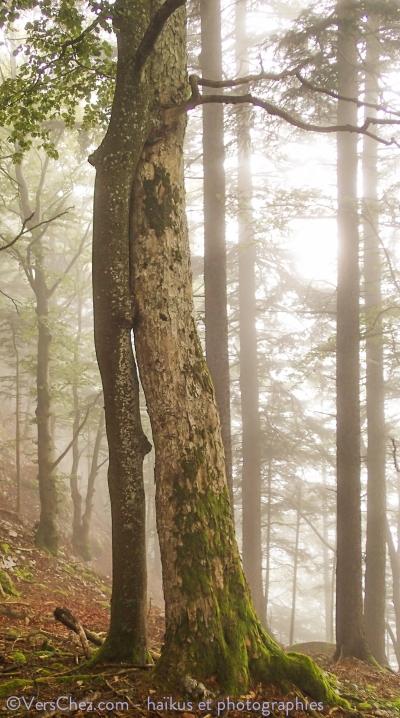 haiku-arbre-amour-foret-racine