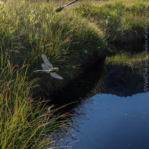 libellule-haiku-marais-poesie-tessin