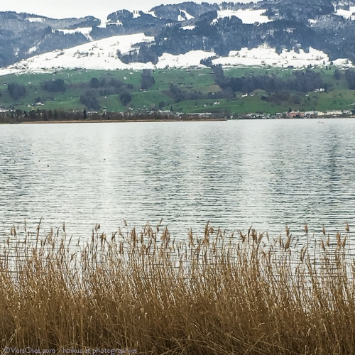 rapperswil-lac-haiku-herbe-printemps