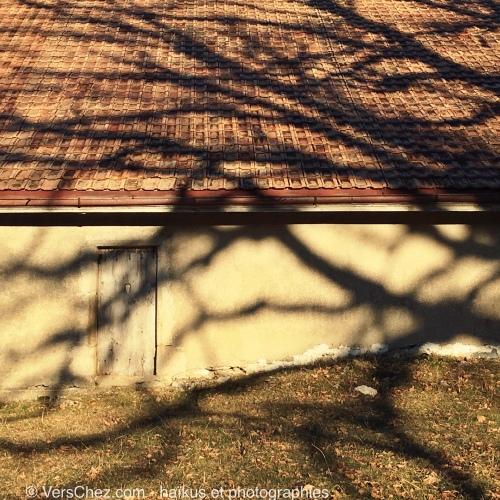 caresse-haiku-ombre-arbre
