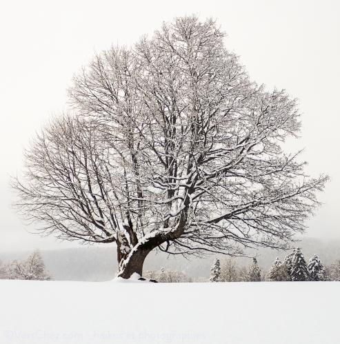 arbre-neige-chasseral-haiku