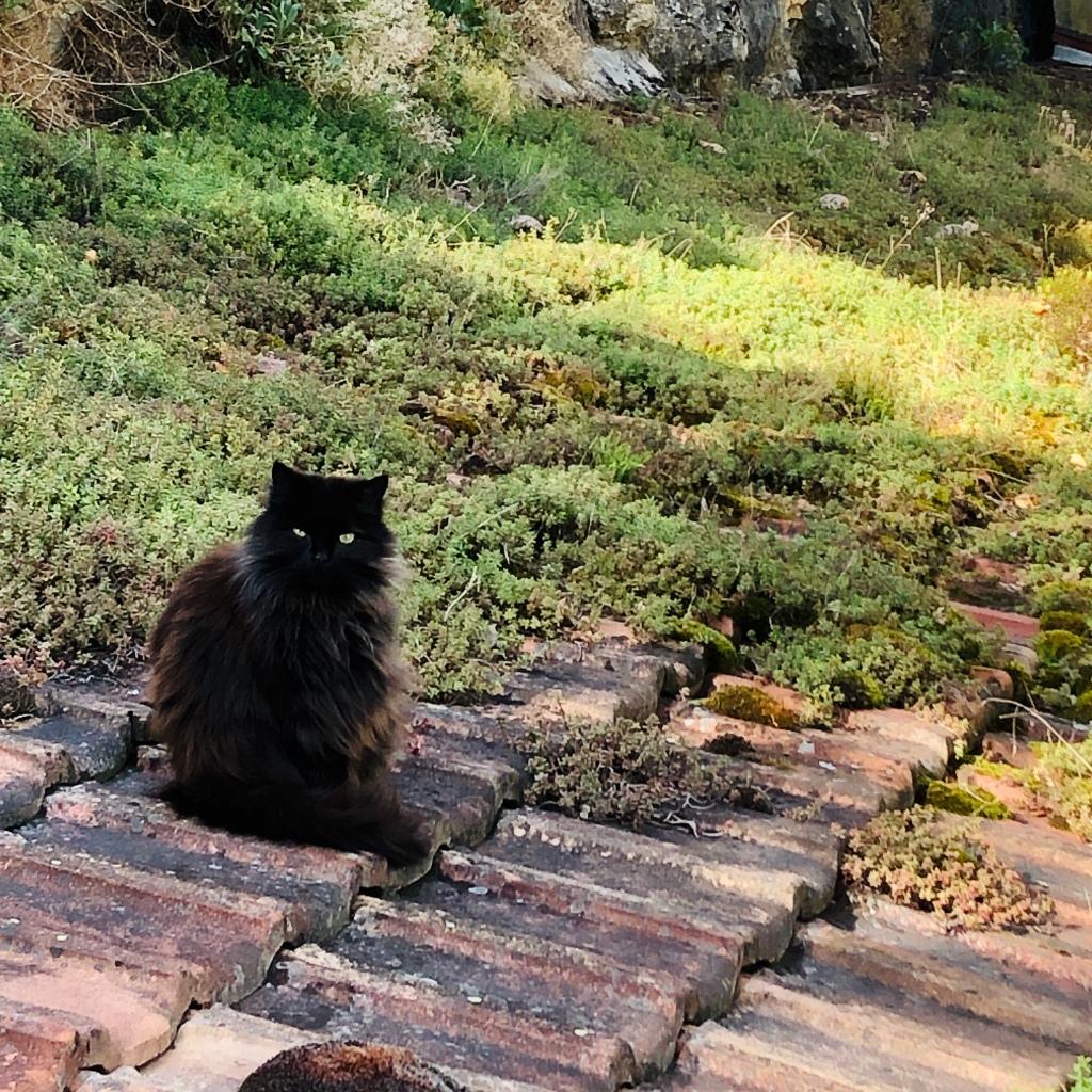 Chat noir haïku