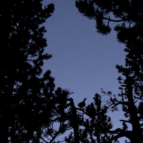 tetras silhouette dans le soir pour un haiku alpes