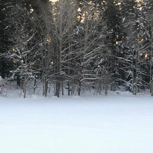 Haiku de neige et d'anniversaire